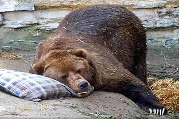 Wat beleggers van beren kunnen leren